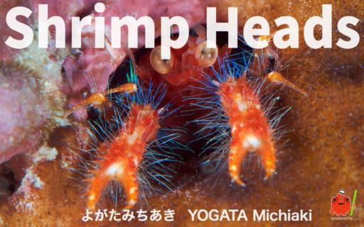 ShrimpHeads