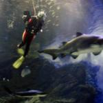 ダイビングできる水族館