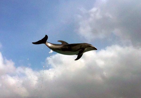 空飛ぶカマイルカ