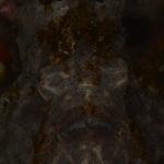 超・初心者向け『デジイチ水中写真 虎の巻(3) 撮る』