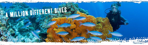 パプアニューギニア・ダイビングイベントのバナー