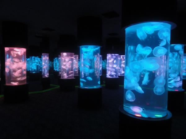 マニラ水族館のクラゲ水槽
