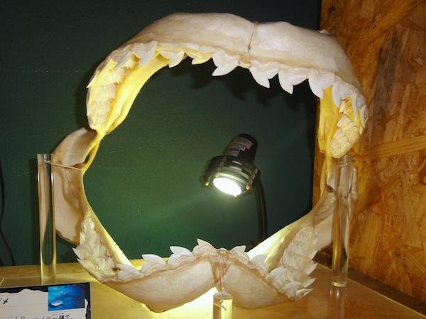 イタチザメの歯
