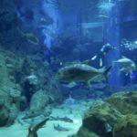 水族館で潜れる!