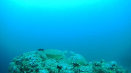 シパダンの水中写真