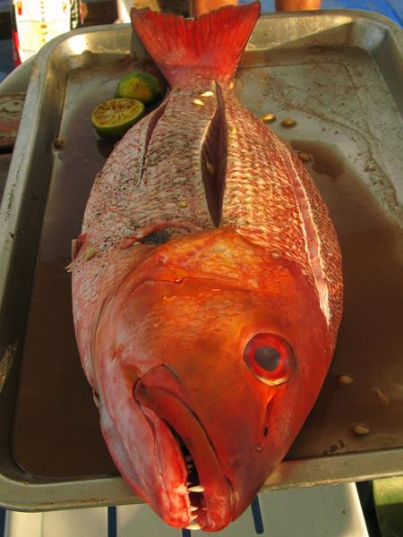 パラオのお魚