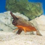 サンシャイン水族館の『へんないきもの展』
