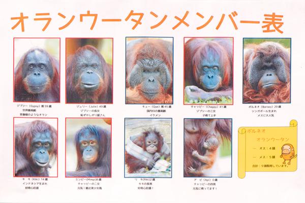 多摩動物公園のオランウータンのメンバー表