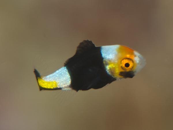 何かの幼魚