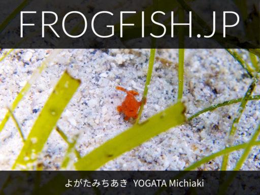 写真集『FROGFISH.JP』