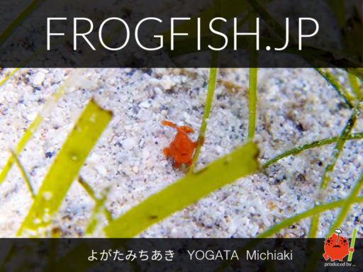 FROGFISH.JP front cover