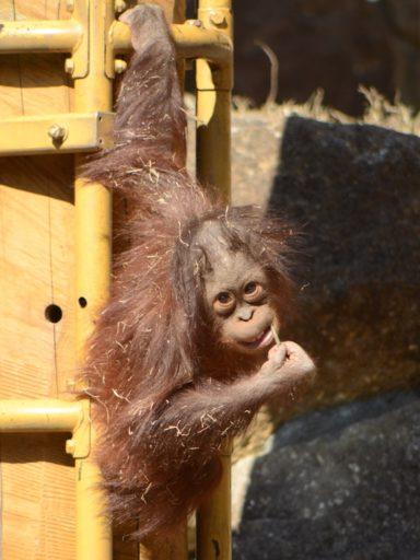 多摩動物公園のアピ