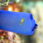 on the tunicate