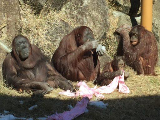 多摩動物公園のジプシーファミリー