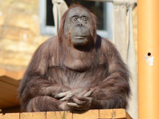 多摩動物公園のジプシー