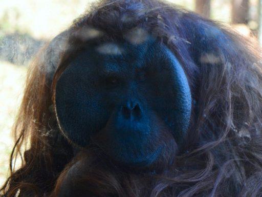 Tama zoo 2018.01.02