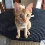 DIVE into AMBONの猫