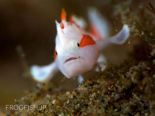 地球の海フォトコンテスト2015 地球環境部門入賞『離陸体勢』