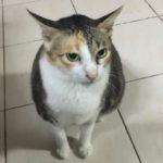 ちゅーるを受けつけないセブの猫